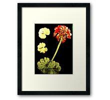 November's Garden 8 - Monoprint Framed Print