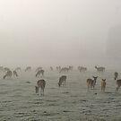 The Deer by Mike Topley