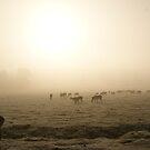 The Deer 4 by Mike Topley