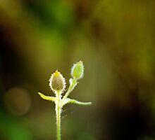 Serenity by gracetalking