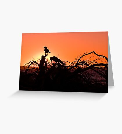 Monkey Mia Sunset Greeting Card