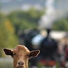 Goats Train by Mark Shuttleworth