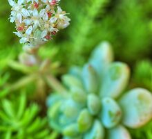 A Bunch of Succulent Flowers by Michael Matthews