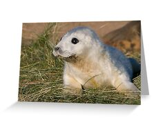 Grey Seal Pup - (Halichoerus grypus) Greeting Card