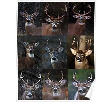 Group of nine - White-tailed Deer Poster