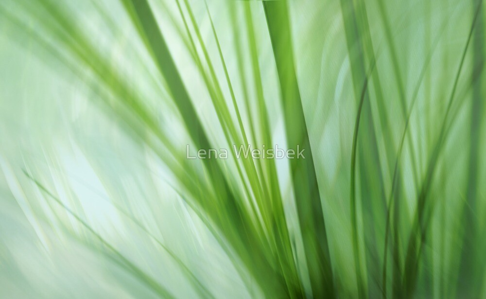 dancing grasses by Lena Weiss