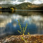 New Growth by Karl Williams