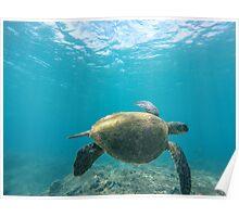 Honu - Turtle Summer  Poster