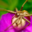 Spider Mother by Paul Revans