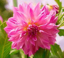 Pink Dahlia by JoeGeraci