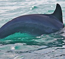 Green Water Dolphin by JulietWhiskey
