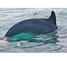 Green Water Dolphin Photographic Print