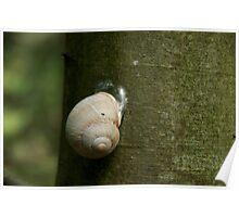 Snoozing snail - Slovak Paradise Poster