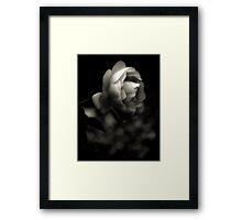 Rose Platinum Palladium Print Framed Print