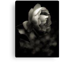 Rose Platinum Palladium Print Canvas Print