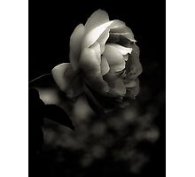 Rose Platinum Palladium Print Photographic Print
