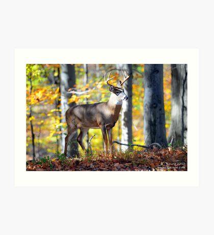 Wildlife in the Backyard Art Print