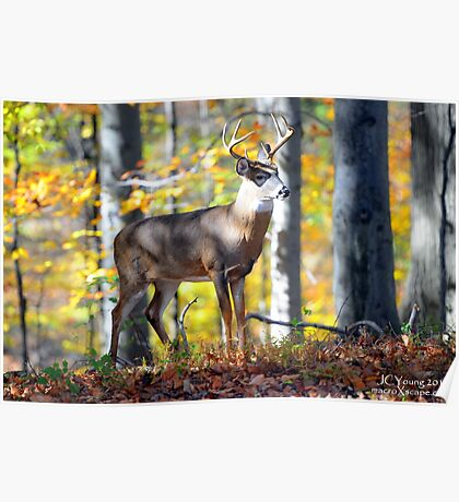 Wildlife in the Backyard Poster