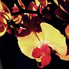 Orchids in Sunset by michaelajf