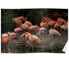 flamingo land Poster