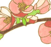 Pink on White Blossoms Sticker
