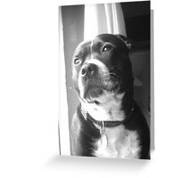 Staffy Bailey Greeting Card
