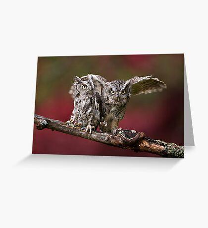 A Pair of Screech Owls - Milton Ontario Greeting Card