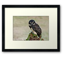 Spectacled Owl- Amherst Mass., USA Framed Print