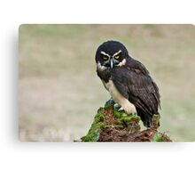 Spectacled Owl- Amherst Mass., USA Canvas Print