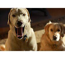 Yawning Doofus Photographic Print