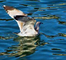 Stretching The Wings by Susie Peek