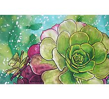 Succulent Rose Photographic Print
