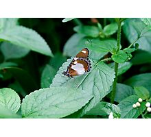butterfly from the forest of india Photographic Print