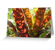 Riot of Color Greeting Card