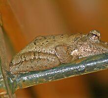 Frog on door handle by jozi1