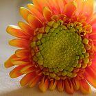 Orange and Yellow by Annie Underwood