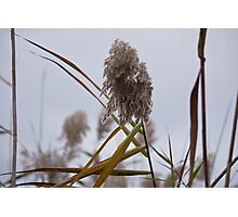 Tall Grass in Autumn Photographic Print