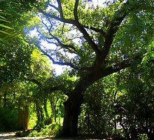 Oak, New Orleans, LA by concha