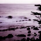 Sea Ranch 8 by Jon Yager