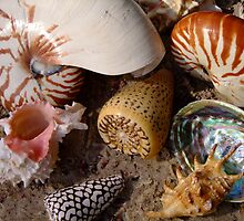 Suzie Sells Seashells by the Seashore! by Gabrielle  Lees