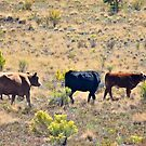Summer cattle in the mountains by Ann Reece