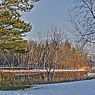 winter pond by Evan Johnson