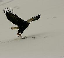Flying Eagle - Dutch Harbor by Melissa Seaback