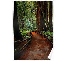 Walk Through Redwoods Poster
