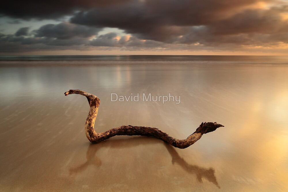 the cobra..... by David Murphy