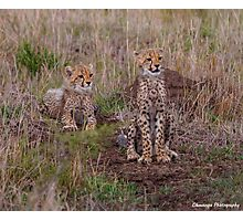 Cheetah Cubs Attention Photographic Print