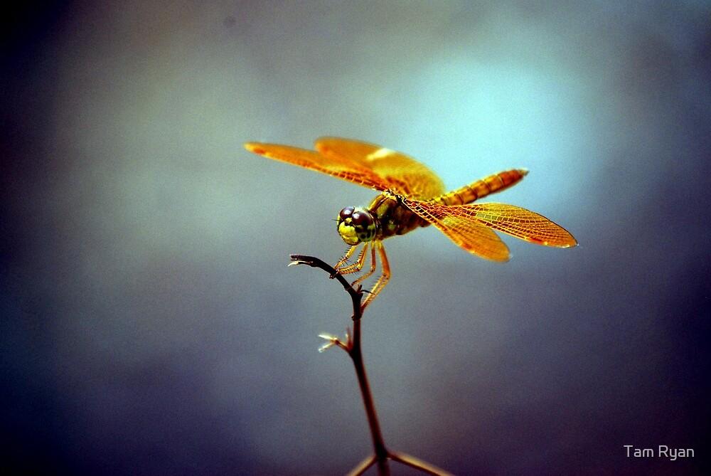 Dragonfly by Tam Ryan