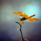 Dragonfly by Tam Ryan