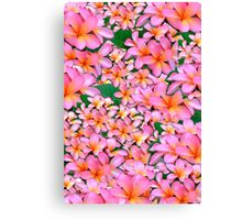 Pink Frangipani Flowers Canvas Print