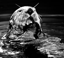 Sea Otter Eating by Melissa Seaback